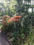 Claude Monets trädgård Fotografering för Bildbyråer