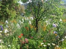 Claude Monets trädgård Royaltyfri Bild