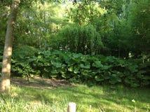 Claude Monets-tuin Royalty-vrije Stock Afbeeldingen