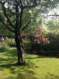 Claude Monets-tuin Royalty-vrije Stock Foto