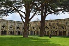 Claustros, catedral de Salisbúria, Salisbúria, Wiltshire, Inglaterra Foto de Stock Royalty Free