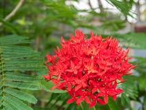 Clave la flor, el punto rojo de la flor y las hojas del verde Flor del punto Fotos de archivo libres de regalías