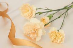 Clavel Imagen de archivo libre de regalías