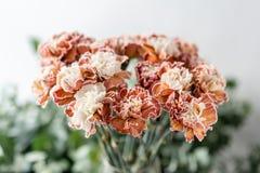 Clavel inusual del color del manojo en el florero de cristal Flores del ramo en fondo ligero wallpaper fotos de archivo