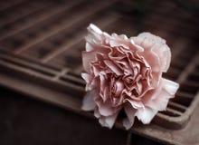 Clavel rosado Fotografía de archivo