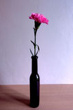 Clavel rosado en botella negra Imagen de archivo libre de regalías