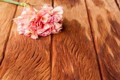 Clavel rosado en vieja textura de madera Imagenes de archivo