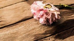 Clavel rosado en vieja textura de madera Foto de archivo