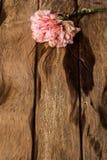 Clavel rosado en vieja textura de madera Fotos de archivo libres de regalías