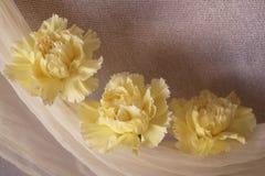 Claveles amarillos hermosos imagenes de archivo