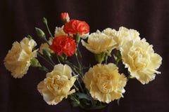 Claveles amarillos y rojos hermosos fotografía de archivo libre de regalías
