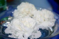 Claveles blancos Fotografía de archivo libre de regalías