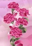 Claveles de Rose Foto de archivo libre de regalías