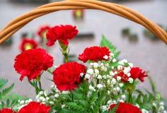 Claveles rojos con el gypsophila de las flores blancas con las hojas verdes Foto de archivo libre de regalías