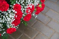 Claveles rojos con el gypsophila de las flores blancas con las hojas verdes Imagen de archivo libre de regalías
