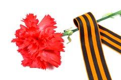 Claveles rojos con la cinta del ` s de San Jorge aislada en el fondo blanco 9 de mayo día de victoria en la gran guerra patriótic Fotos de archivo libres de regalías