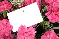 Claveles rosados Fotos de archivo libres de regalías