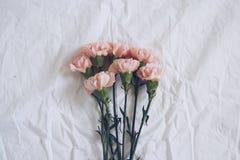 Claveles rosados en el fondo blanco Foto de archivo