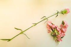 Claveles rosados en una forma del corazón Fotos de archivo