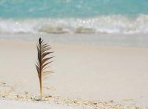 Clavette à la plage Image stock