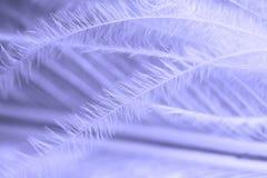 Clavette Image libre de droits