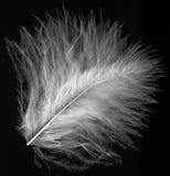 Clavette blanche Photographie stock