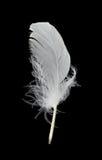 Clavette blanche sur le fond noir Photo libre de droits