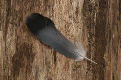 Clavette d'oiseau Image stock