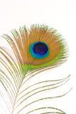 Clavette de paon photos libres de droits