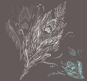 Clavette de paon Illustration Stock