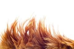 Clavette de poulet Images stock