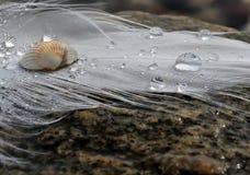 Clavette et baisses sur la plage Images libres de droits