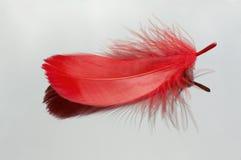 Clavette rouge Images libres de droits