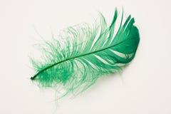 Clavette verte Images libres de droits