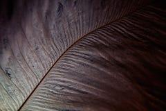 clavettes Image libre de droits