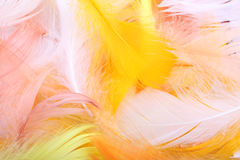 Clavettes colorées Photo stock