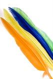 Clavettes d'oiseau colorées Photo libre de droits