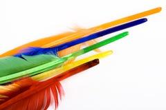 Clavettes d'oiseau colorées Photo stock