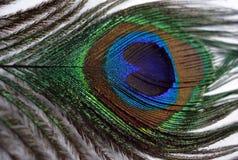 Clavettes d'un paon Photo libre de droits
