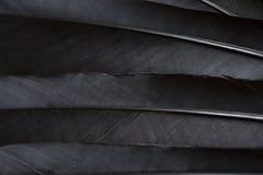 Clavettes noires photos stock