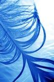 Clavettes sur la glace. photographie stock