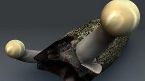Claviceps purpurea Stock Images