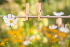 Clavija de ropa en jardín Fotos de archivo libres de regalías