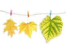 Clavijas de las hojas y de ropa de otoño Fotos de archivo libres de regalías
