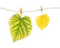 Clavijas de las hojas y de ropa de otoño Fotografía de archivo libre de regalías