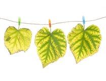 Clavijas de las hojas y de ropa de otoño Fotografía de archivo