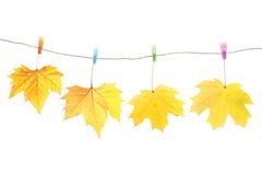 Clavijas de las hojas y de ropa de otoño Foto de archivo libre de regalías
