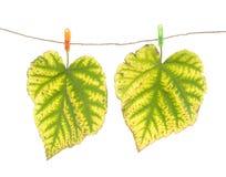 Clavijas de las hojas y de ropa de otoño Imágenes de archivo libres de regalías