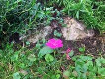 Clavo de la hierba, en el fondo de una piedra y de un verde otoñal fotografía de archivo