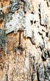 Clavo oxidado Fotografía de archivo libre de regalías